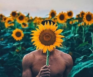 sunflower and boy image