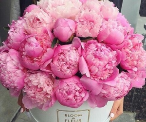 flower, lovely, and pink image