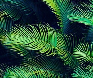 green, nature, and palms image