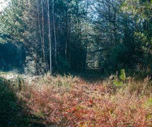 alley, auburn, and autumn image