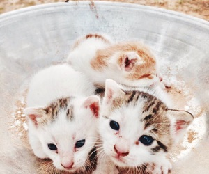 cats, heart, and kittens image