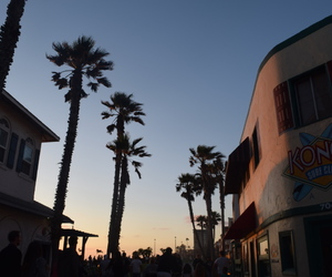 california, palm trees, and photography image