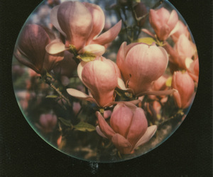 circle, Film Photography, and pink image