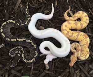 snake, animal, and black image