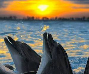 dolphins, sea, and ocean image