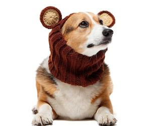 grizzly bear zoo snood
