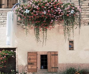 flowers, house, and nature image