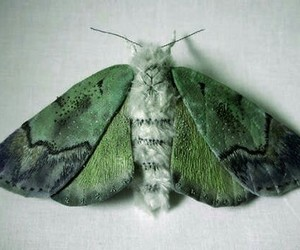 grunge and moth image