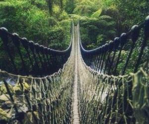 bridge, nature, and adventure image