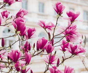 pink, spring, and beautiful view image