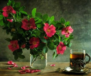 flowers, morning, and natural image