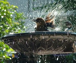 bird and water image