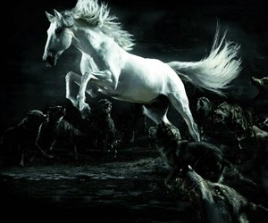 horse, animal, and wolves image