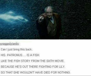 harry potter, fish, and book image