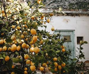 house, lemon, and nature image