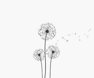 flowers and dandelion image