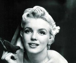 Marilyn Monroe, black and white, and bird image