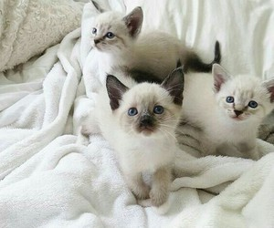 adorable, cats, and kittens image