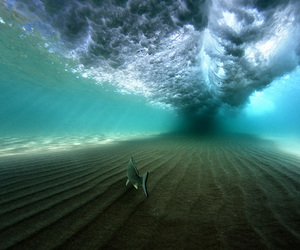waves, fish, and ocean image