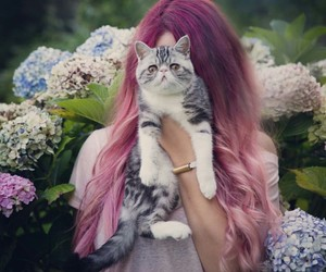 beautiful, cat, and violet hair image