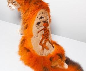 cat, orange, and lol image