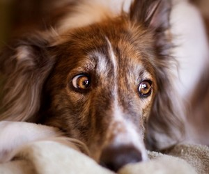 animals, dogs, and silken windhound image