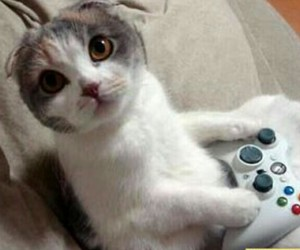 cat, game, and animal image