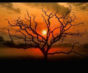 sunrise, sunset, and trees image