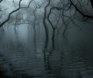 tree, swamp, and dark image