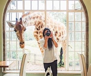 animal, garden, and giraffe image