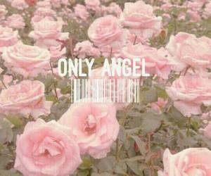 Lyrics, pink, and Harry Styles image