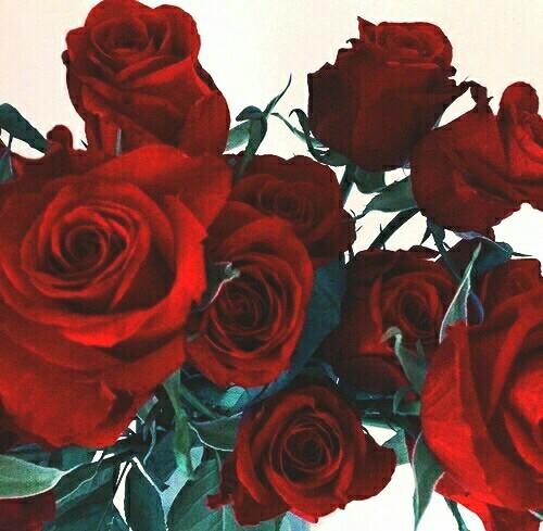 beautiful, flowers, and photo image