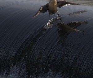 duck, funny, and animal image
