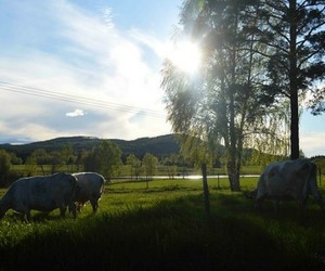 beautiful, cow, and grass image