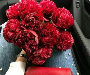 rose red, girl girly girls, and red feed image