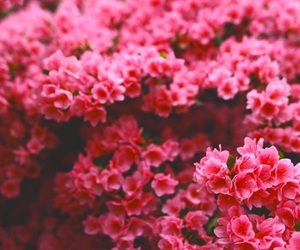 pink flowers, halsey, and pink theme image