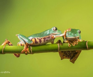 animals and frogs image