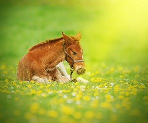 animals, baby animals, and filly image