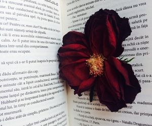 bibliophile, book, and flower image