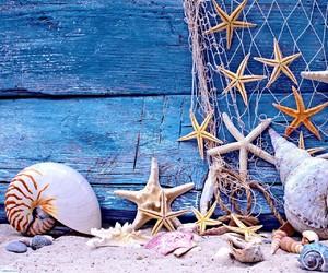 ocean, sea, and shells image
