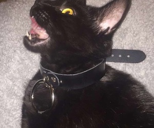 cat, black, and aesthetic image