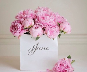 flowers, peonies, and june image