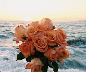 flowers, rose, and ocean image