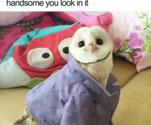 funny, animals cute sweet, and meme image