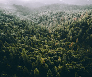 adventure, forest, and green image