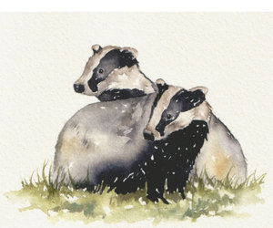 animals, art, and badger image