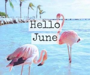 beach, easel, and flamingo image