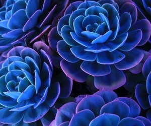 flowers, blue, and plants image