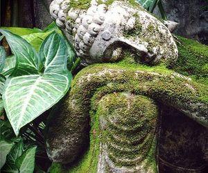 beliefs, fauna, and moss image