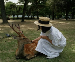 animals, park, and deer image